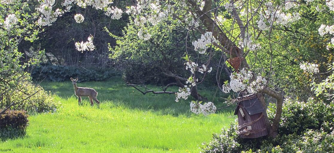 Aeblegaarden B&B Garden wild life