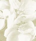 Aeblegaarden-BB-Logo